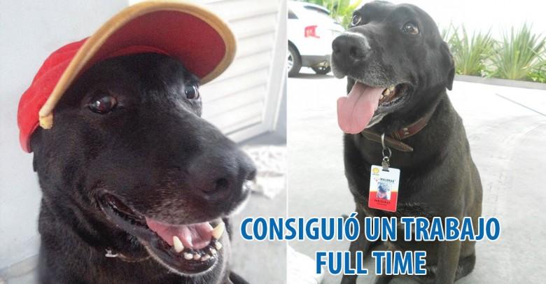 Este perro abandonado en una estación de servicio obtuvo un trabajo de tiempo completo