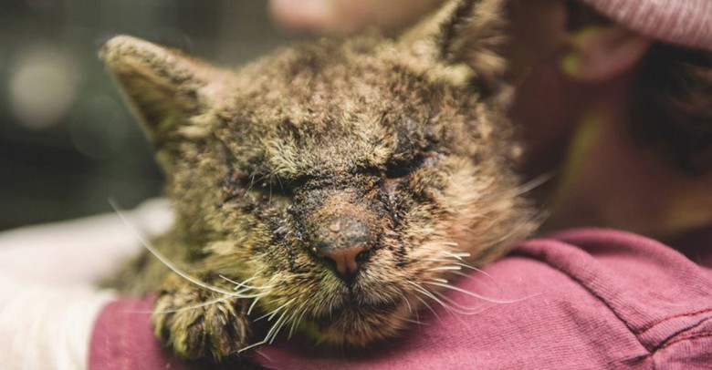 Nadie se atrevía a tocar a este gato y  al final encontró a alguien que no lo rechazó y se lo llevó abrazado