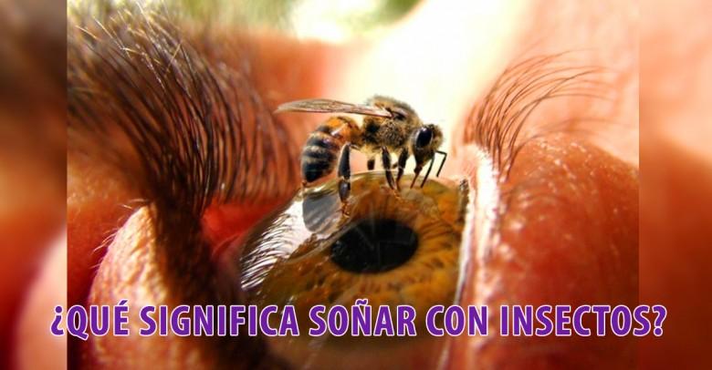 ¿Qué significa soñar con insectos?