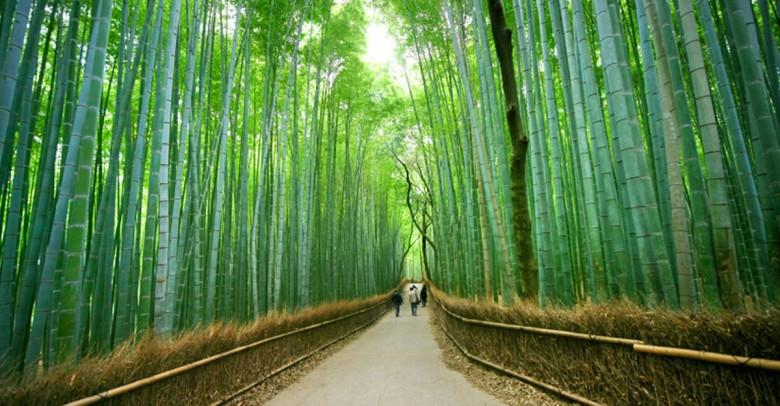 3 prácticas japonesas que mejorarán tu vida