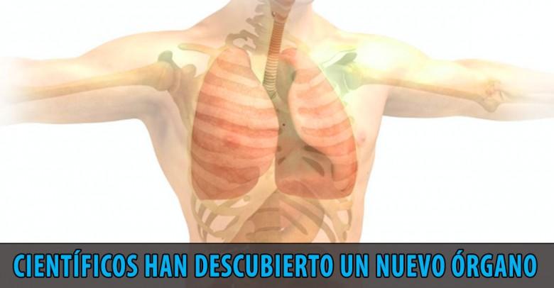 Científicos han descubierto un nuevo órgano del cuerpo humano