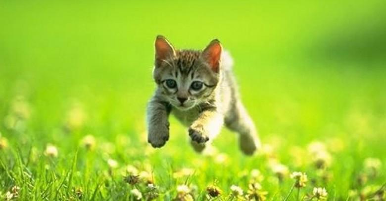 15 Situaciones que entenderás si amas a un gato.