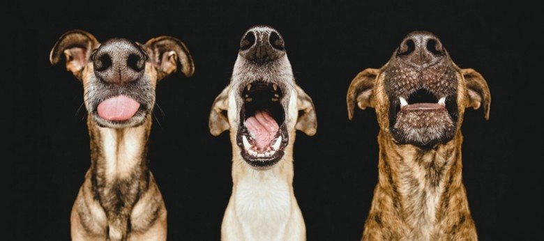 20 Fotos que capturan los gestos más expresivos de los perros