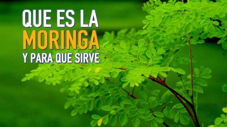 Moringa: este es el nuevo superalimento