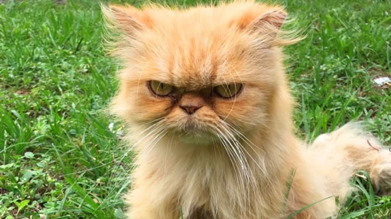 Ellos pensaron que este gatito era un gruñon porque no tenia un hogar, pero no... sigue con la misma cara