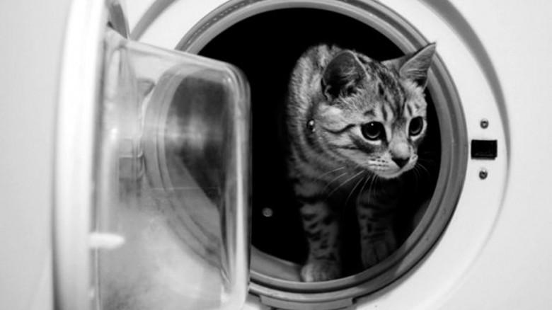 Estas son las cosas que le suceden a las personas que tienen gatos