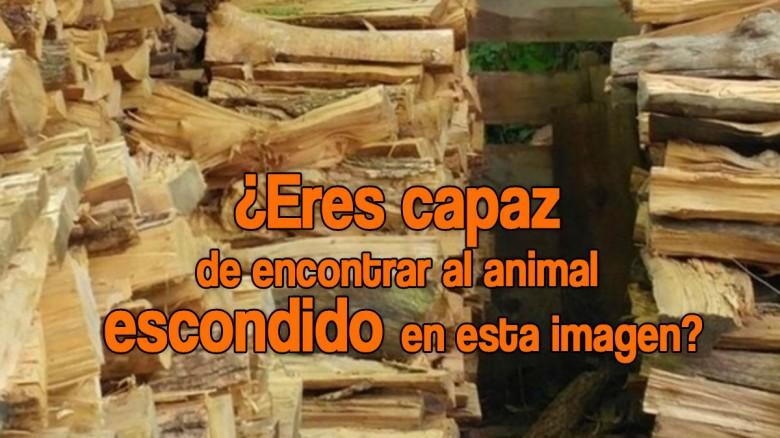 Reto visual: ¿Eres capaz de encontrar al animal escondido en esta imagen?
