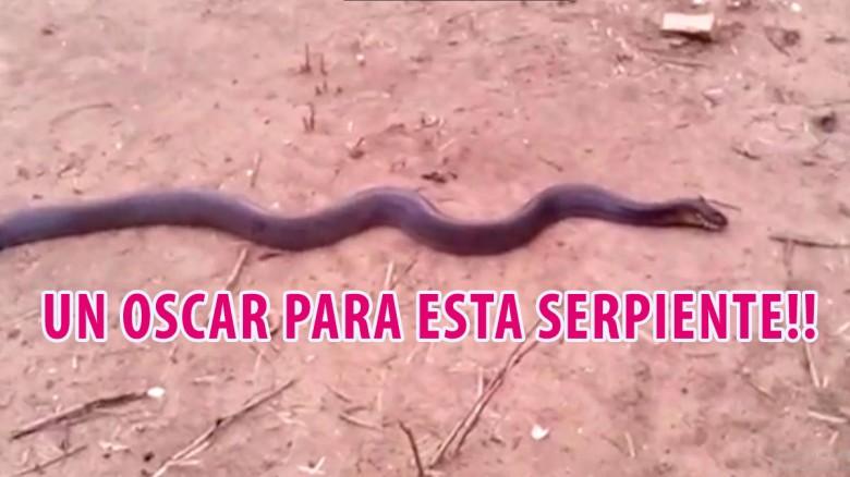 Un óscar para esta serpiente que se hace la muerta!!
