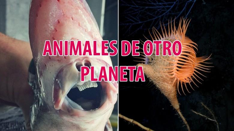 Criaturas de otro planeta bajo nuestros océanos