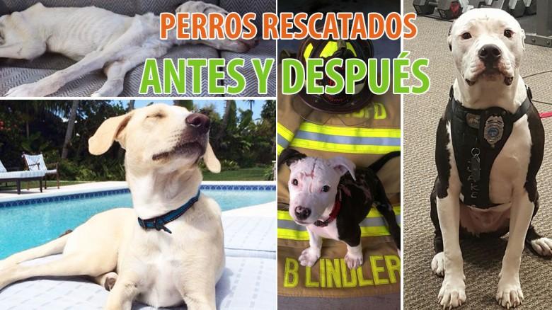Perros rescatados. Antes y después