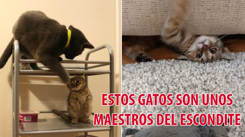 ¡Estos gatos son unos unos maestros del escondite!