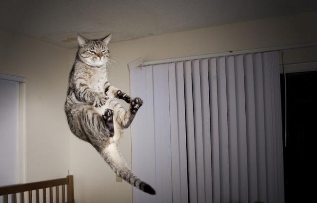 11899-R3L8T8D-650-funny-jumping-cats-102__880