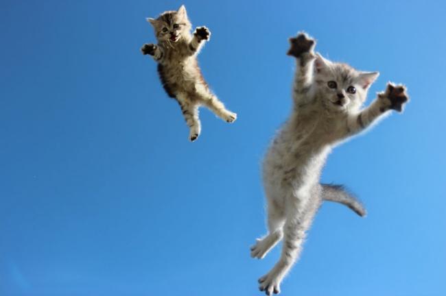 11900-R3L8T8D-650-funny-jumping-cats-103__880