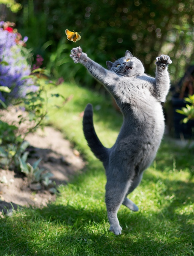 11902-R3L8T8D-650-funny-jumping-cats-51__880
