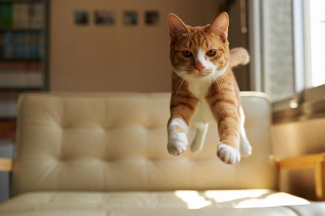 11903-R3L8T8D-650-funny-jumping-cats-71__880