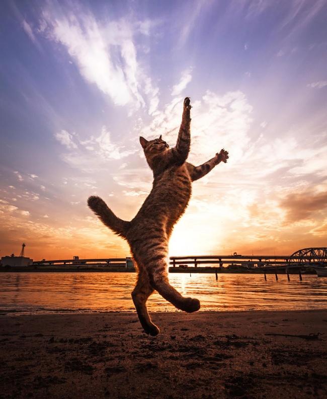 11904-R3L8T8D-650-funny-jumping-cats-91__880