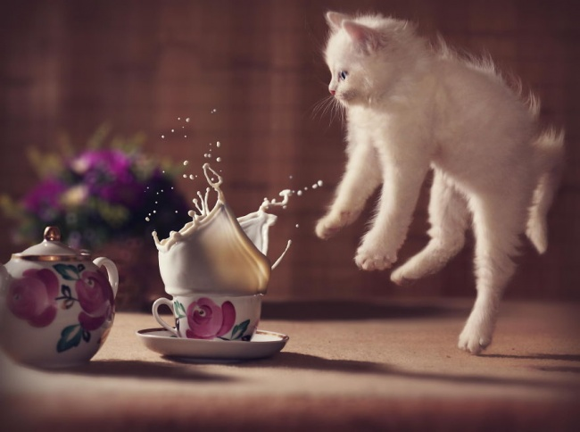 11907-R3L8T8D-650-Jumping-Cats__880