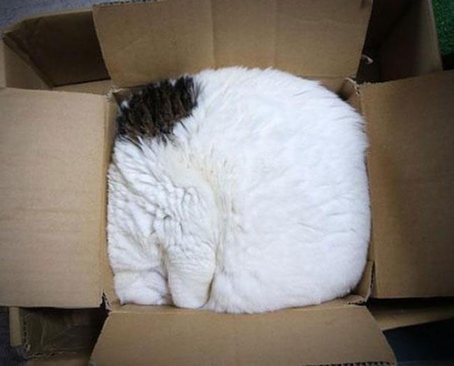 2606-R3L8T8D-650-14223223639900-funny-cats-if-it-fits-i-sits-6