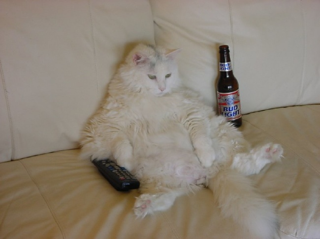 2687-R3L8T8D-650-fat-cat-with-remote-and-beer-sit-on-sofa