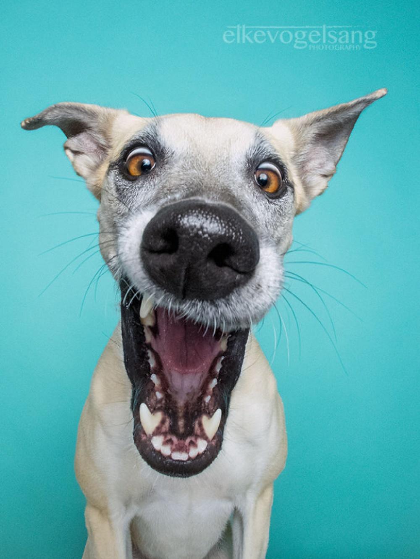 758055-1000-1453753130-expressive-dog-portraits-elke-vogelsang-6
