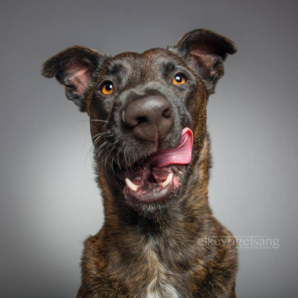 758305-1000-1453753130-expressive-dog-portraits-elke-vogelsang-11
