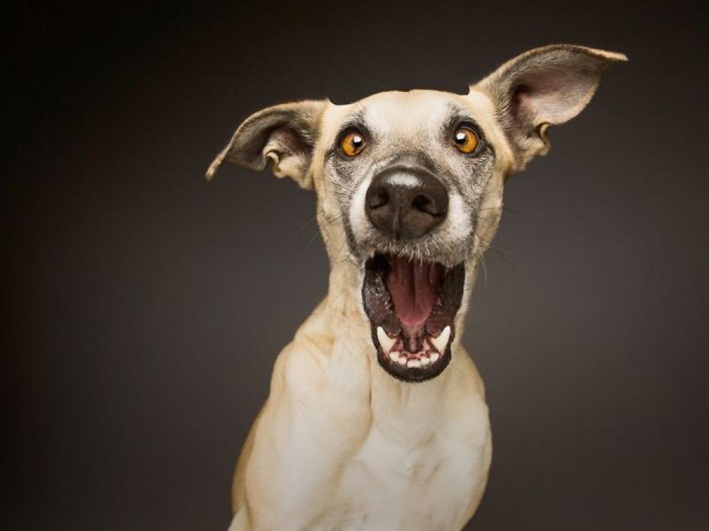 759055-1000-1453753130-expressive-dog-portraits-elke-vogelsang-14