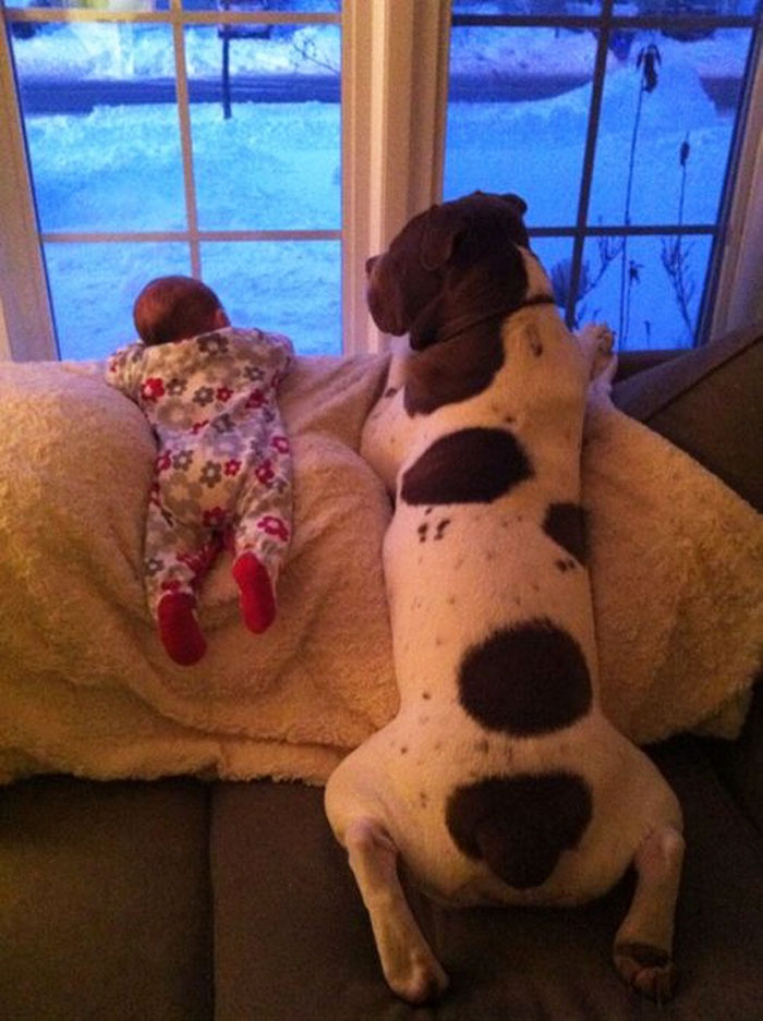 cute-big-dogs-and-babies-2