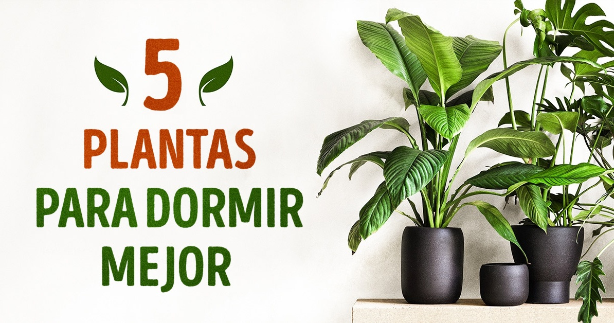 Estas 5 plantas te ayudar n a dormir mejor - Plantas para dormitorio ...