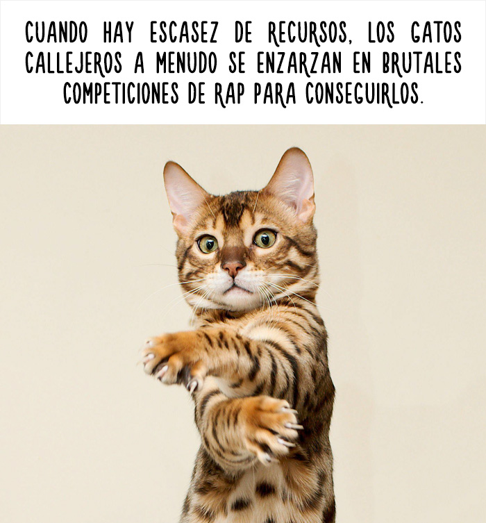 datos-animales-divertidos-7