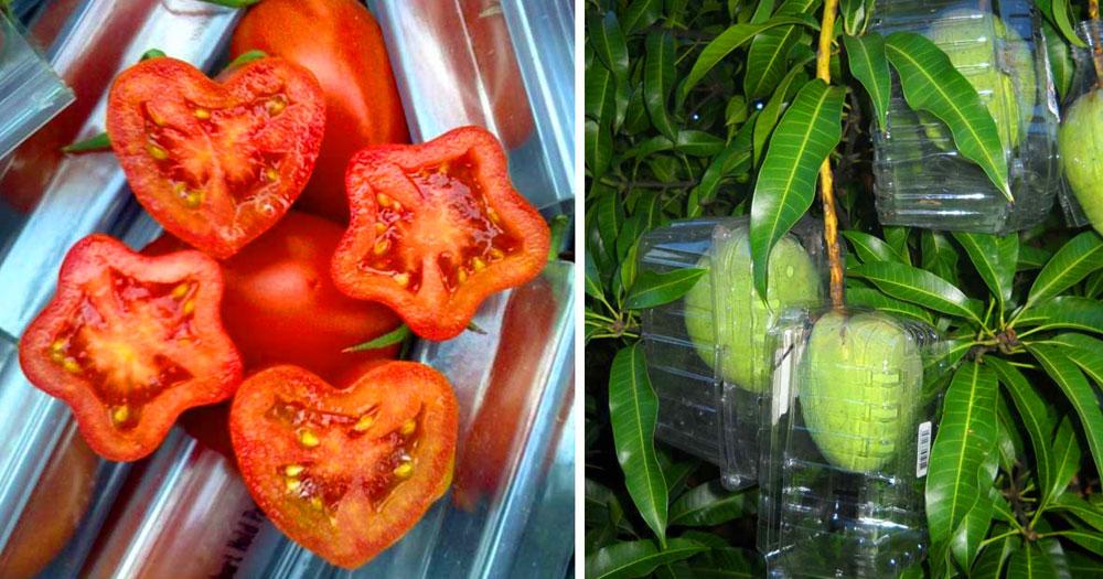 Mira estos 16 sencillos trucos de jardiner a para hacerlos for Trucos jardineria