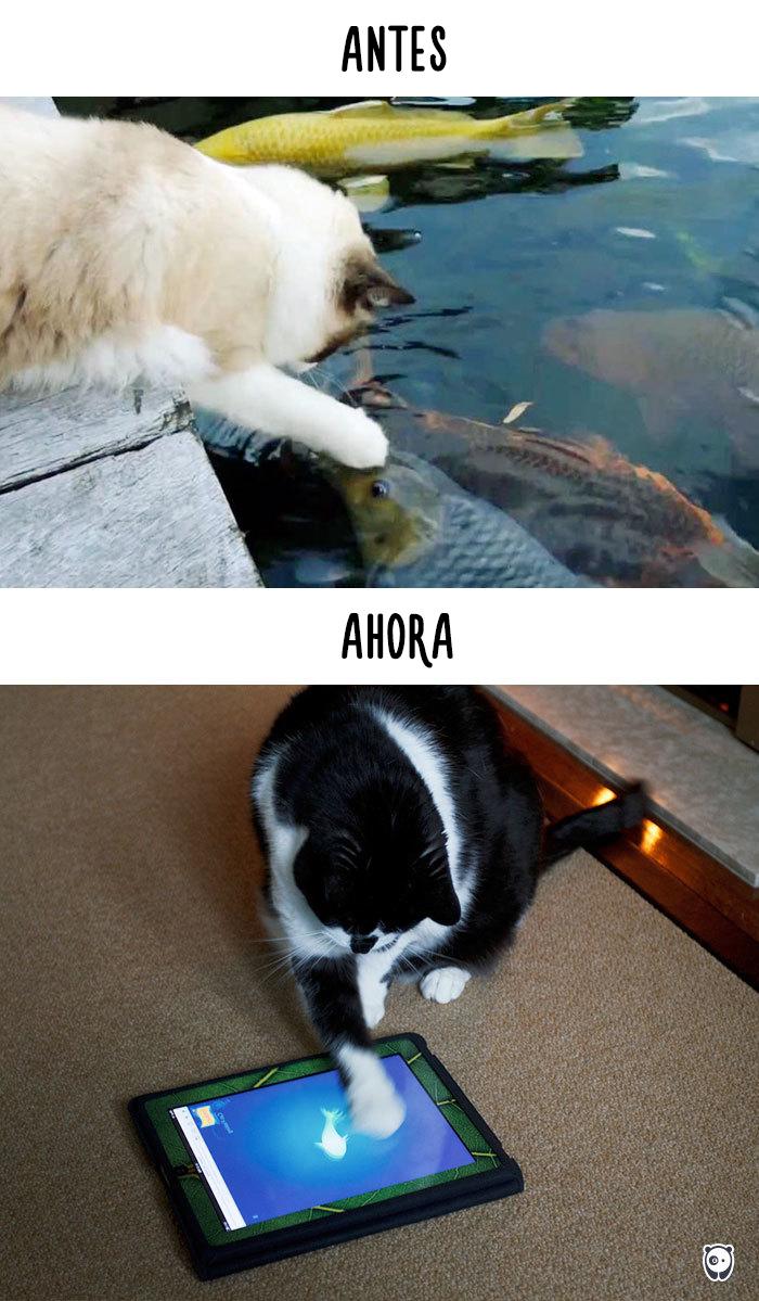 antes-ahora-gatos-tecnologia-10
