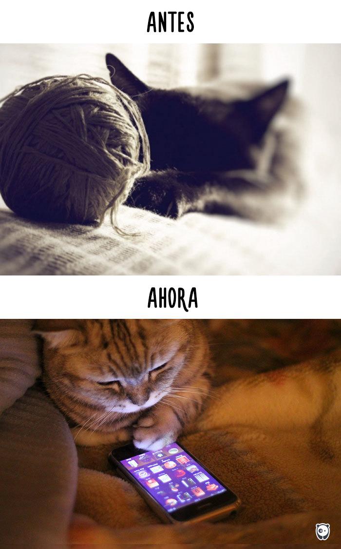 antes-ahora-gatos-tecnologia-2