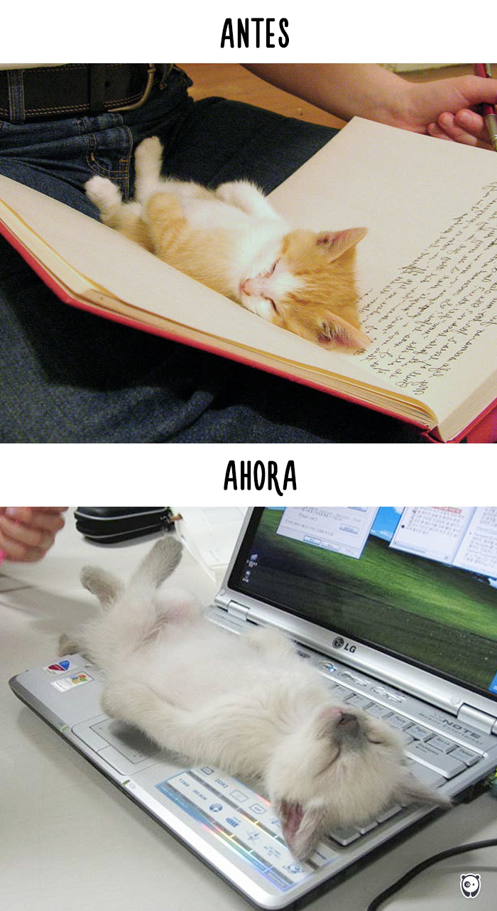 antes-ahora-gatos-tecnologia-4