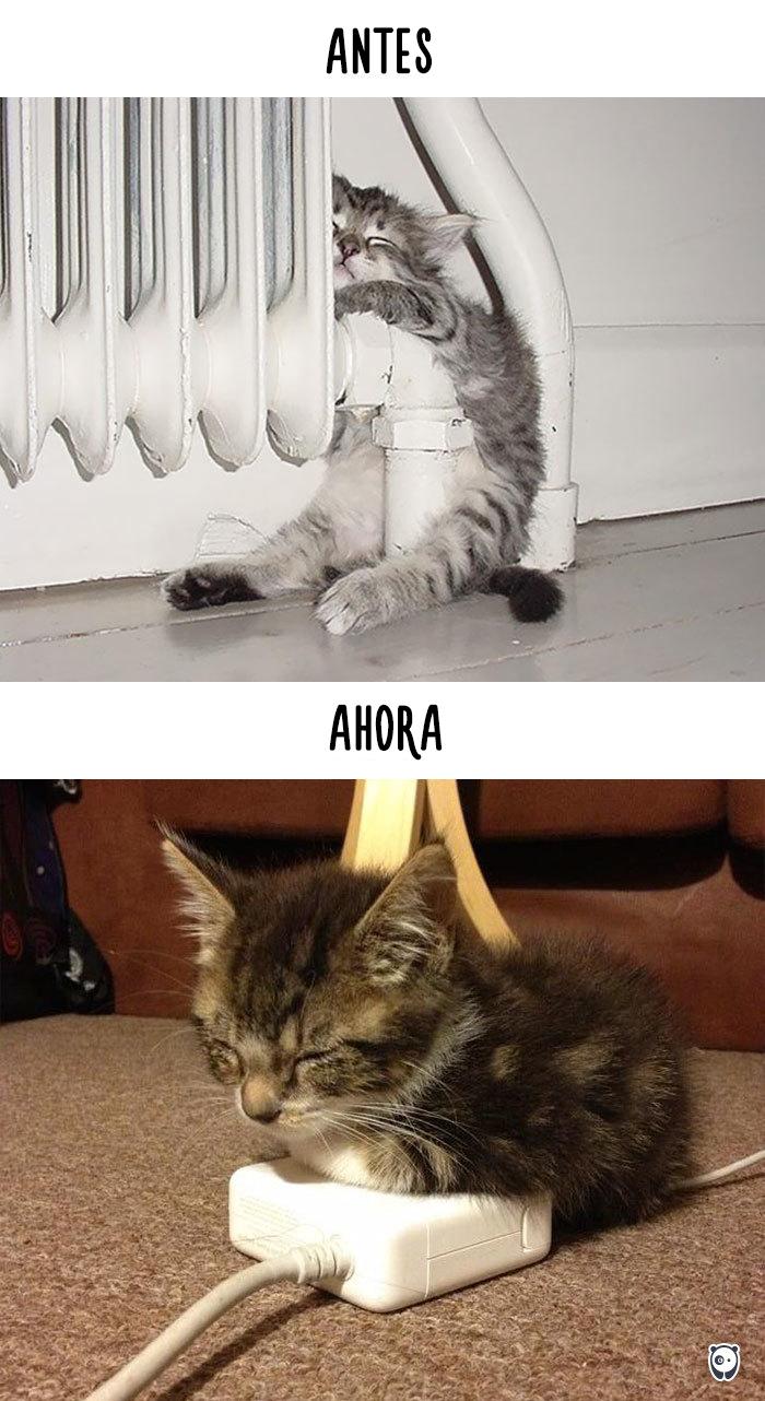 antes-ahora-gatos-tecnologia-5