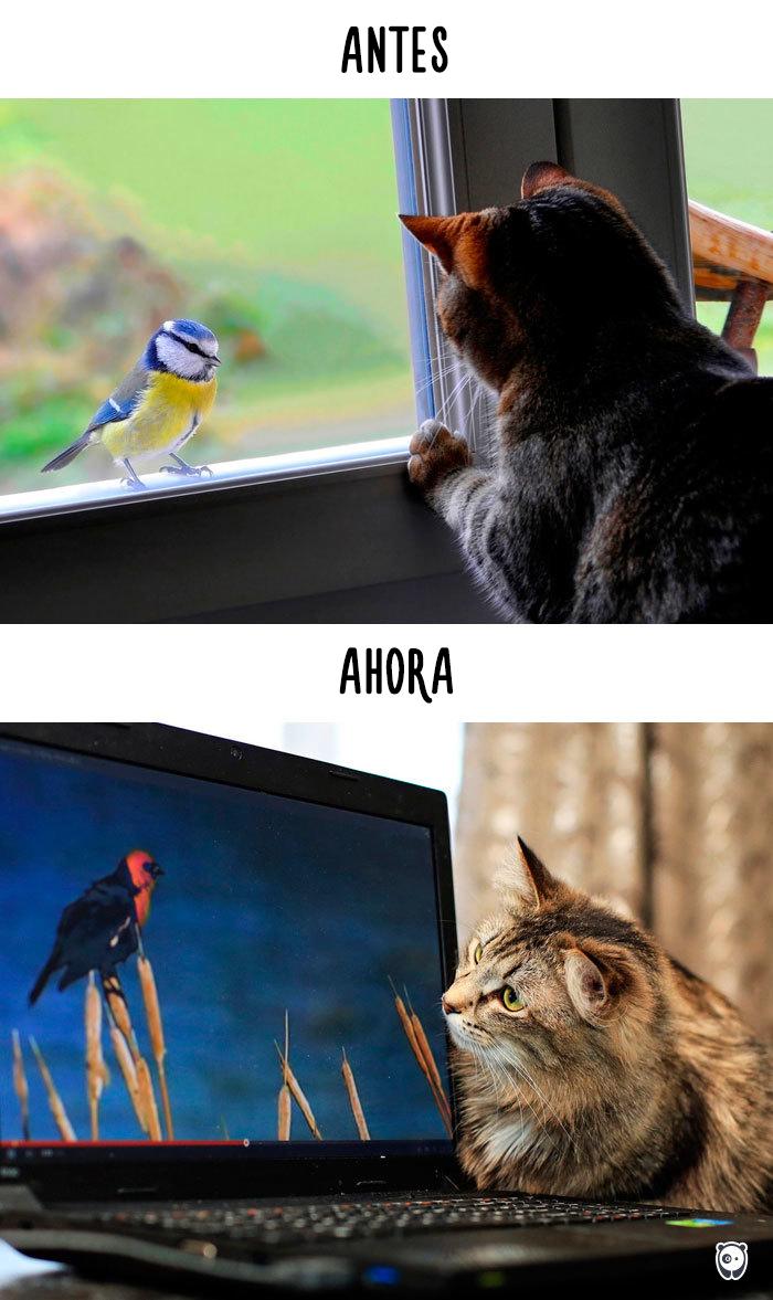 antes-ahora-gatos-tecnologia-6