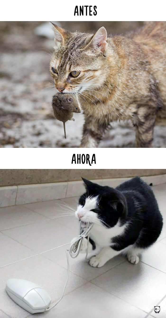 antes-ahora-gatos-tecnologia-7