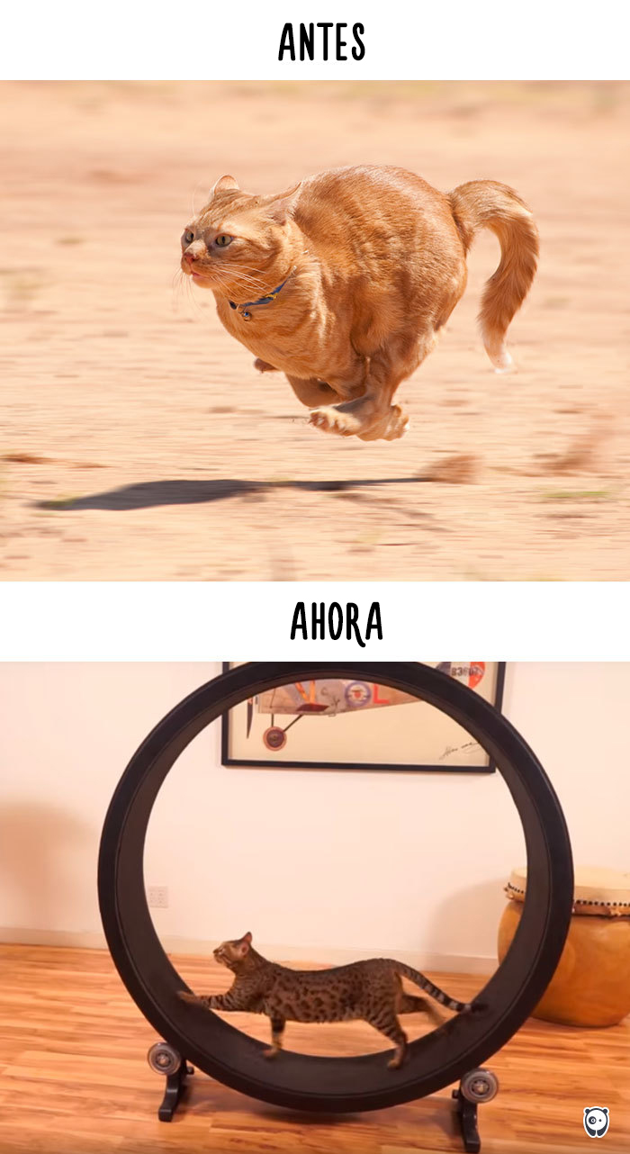 antes-ahora-gatos-tecnologia-9