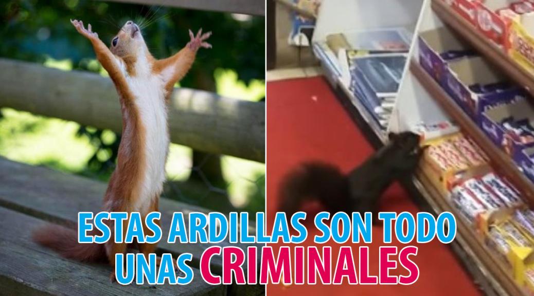 ardillascriminales
