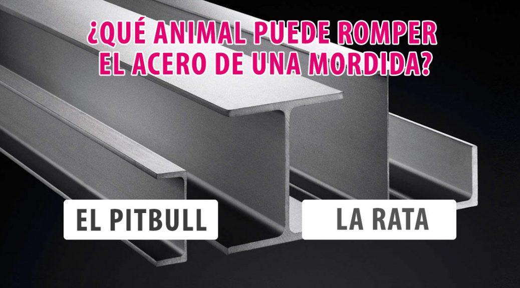 test-animales